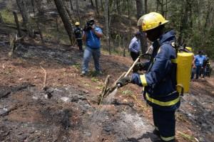 Medio Ambiente incorpora más brigadas al plan de prevención contra incendios forestales
