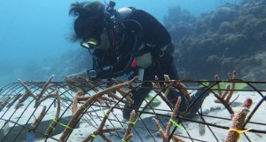Corales-en-Boca-Chica